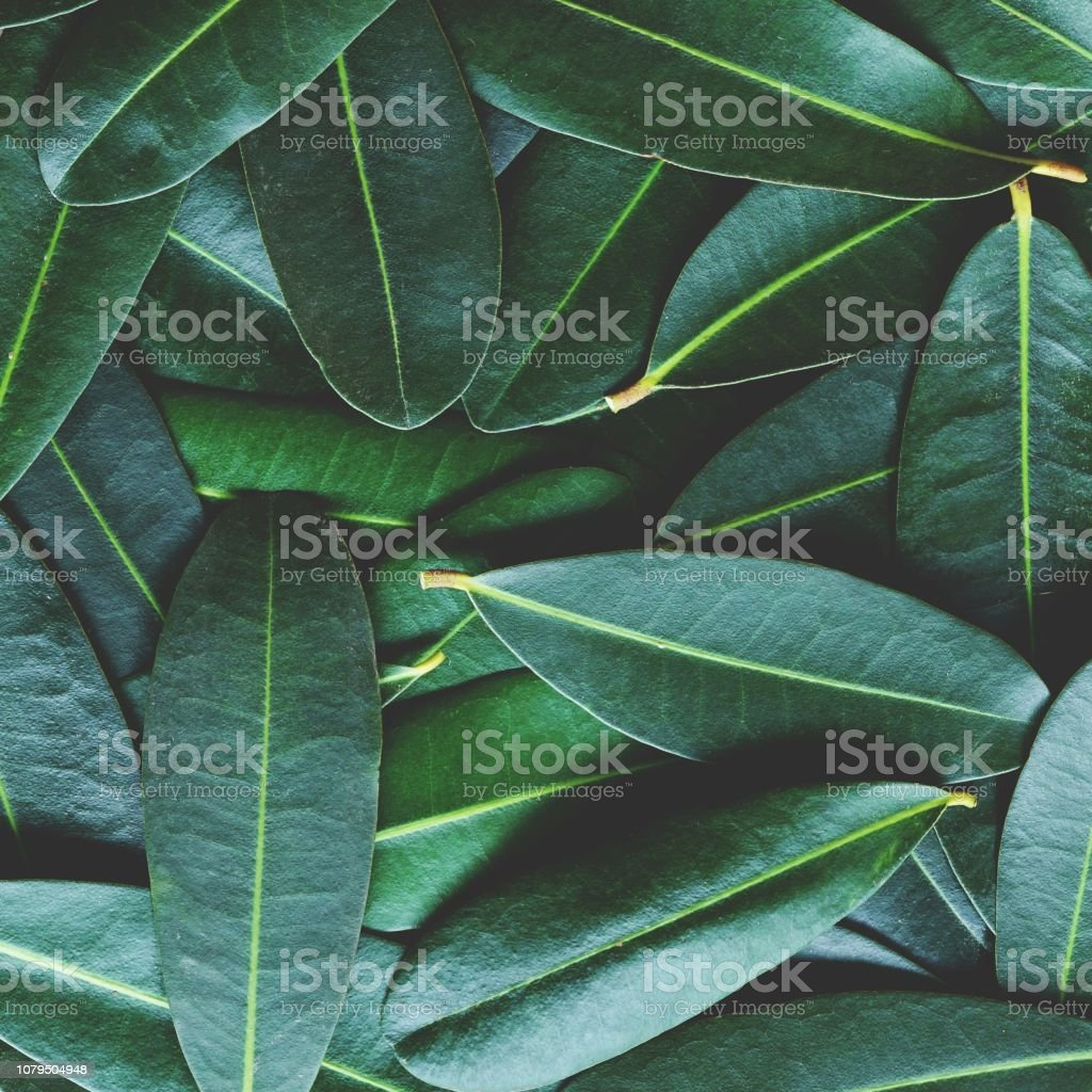 Green leaf arranged into pattern texture background, tropical nature relaxation wallpaper texture, copy space stock photo