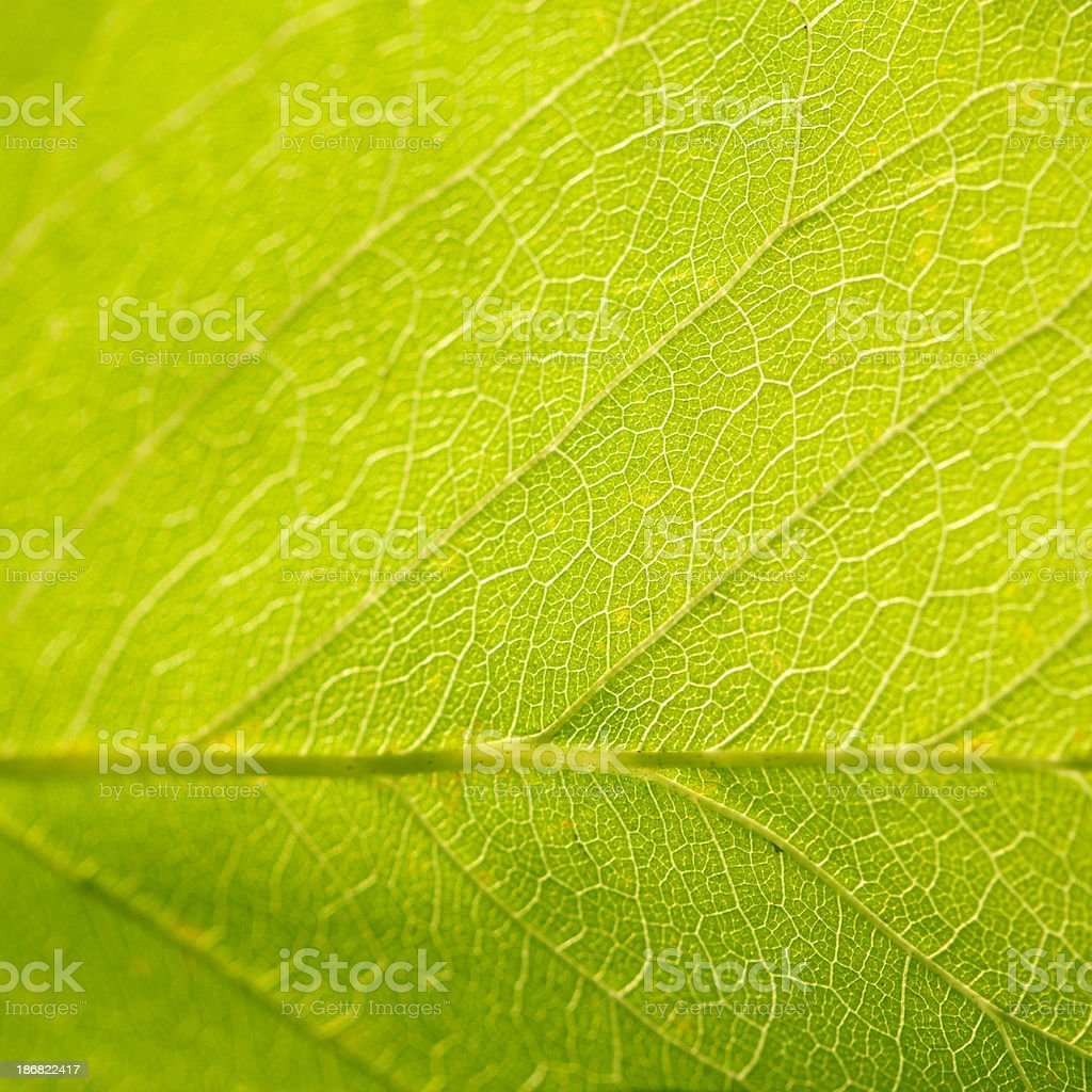 Green leaf as background - Royalty-free Autumn Stock Photo