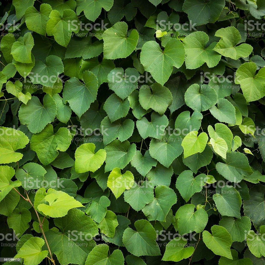 Green leaf background Leaves texture pattern photo libre de droits