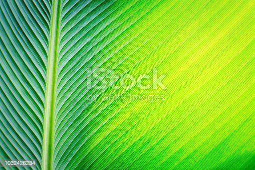 istock Green leaf background 1032426234