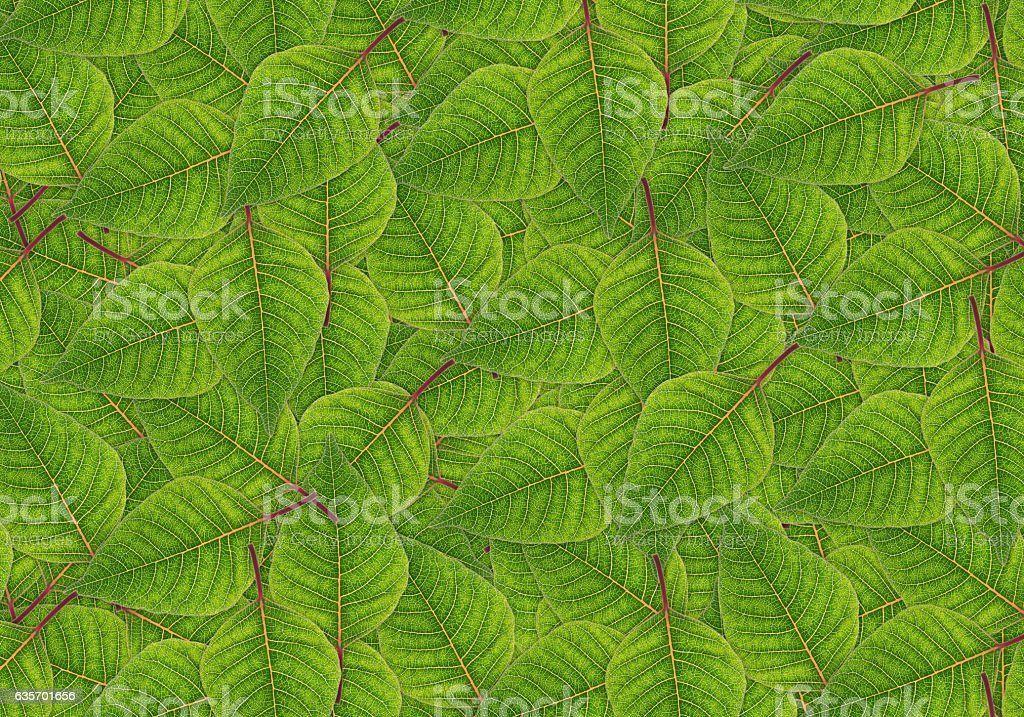 green leaf background. royalty-free stock photo