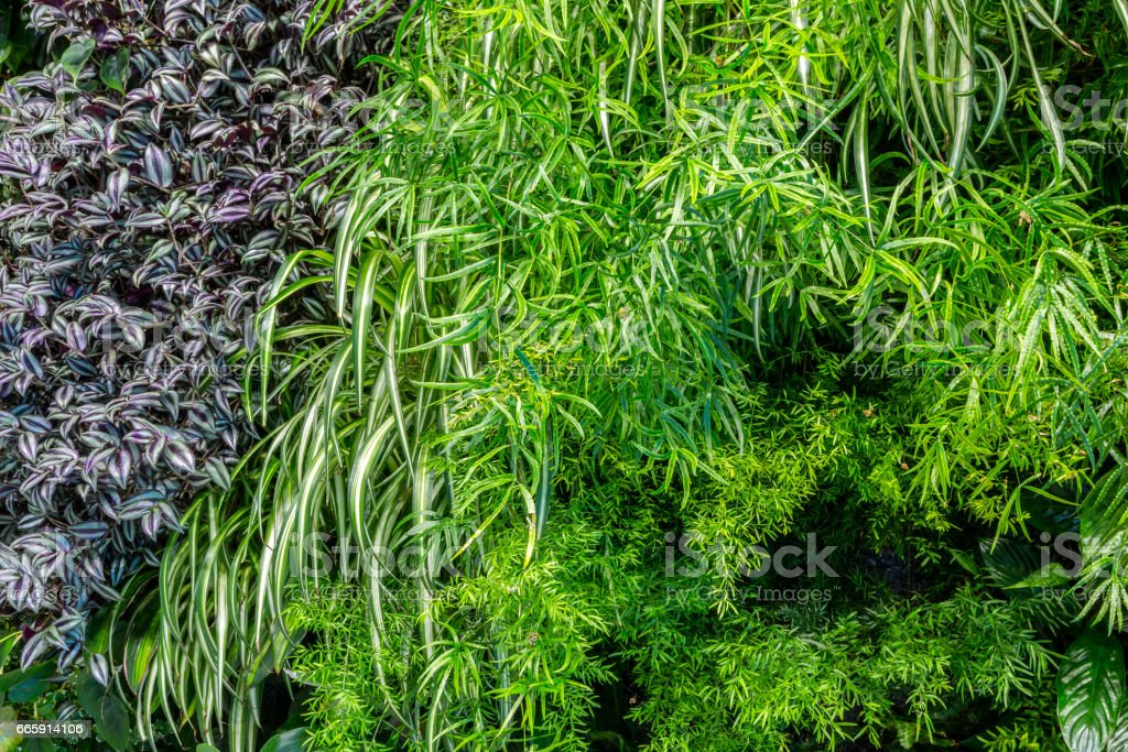 green leaf background foto stock royalty-free