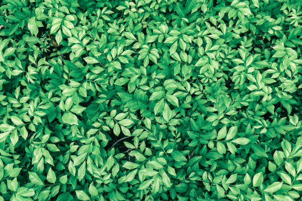 green leaf backgrounds - foliate pattern stock photos and pictures