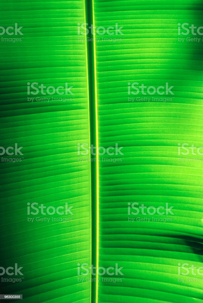 Green Leaf, Backlit, Plant, Vibrant, Tropical, Fresh, Close-Up, Abstract, Background stock photo