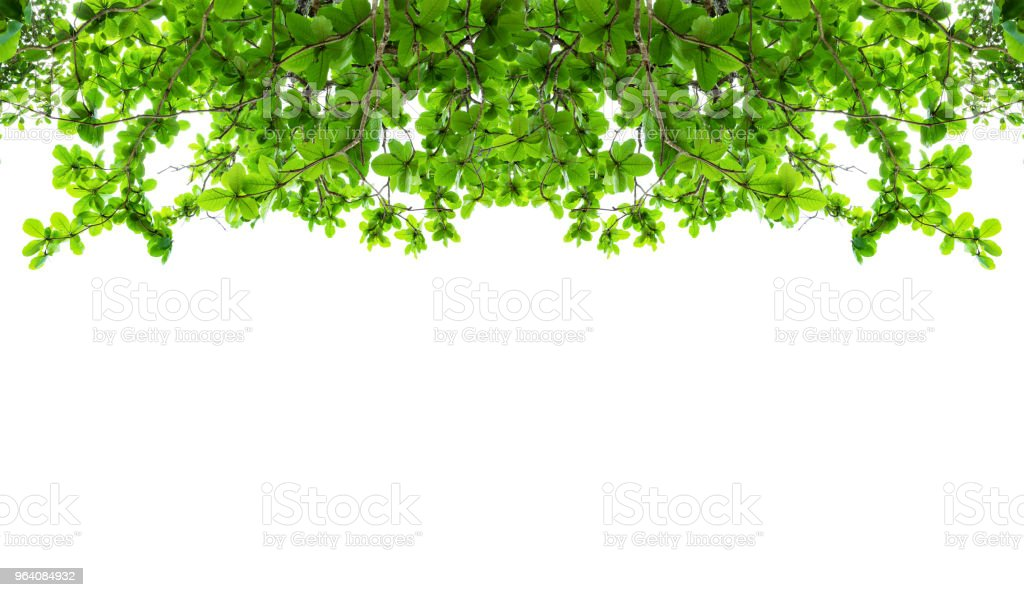 Green leaf branch tree frame on white background. - Royalty-free Backgrounds Stock Photo