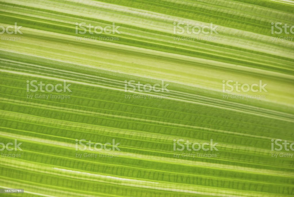 green leaf close up abstract background royalty-free stock photo
