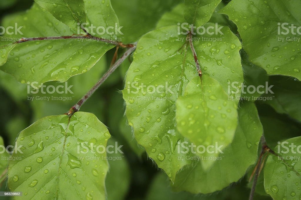 green leaf close up royalty-free stock photo