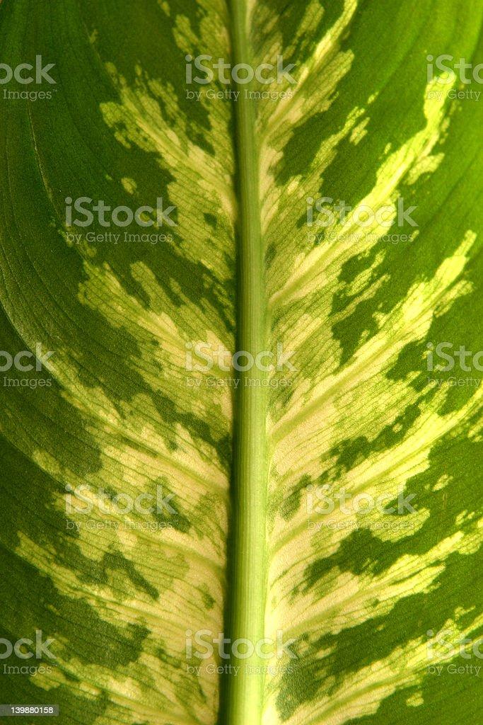 green leaf closeup royalty-free stock photo