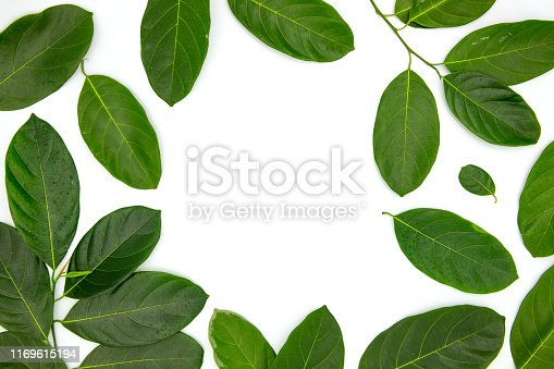 Green leaf composition with text place in center on white background. Summer leaf frame top view photo. Elegant natural backdrop with text space. Green leaf flat lay. Organic botanical banner template