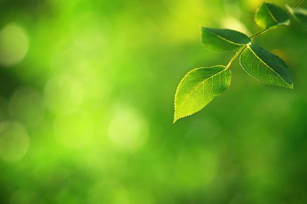 Green Leaf - defocused background stock photo
