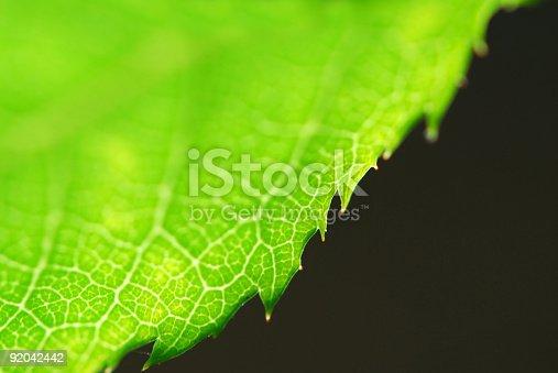 istock Green leaf edge 92042442