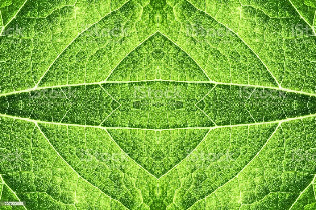 Green leaf epidermis pattern background surreal shaped symmetrical kaleidoscope stock photo