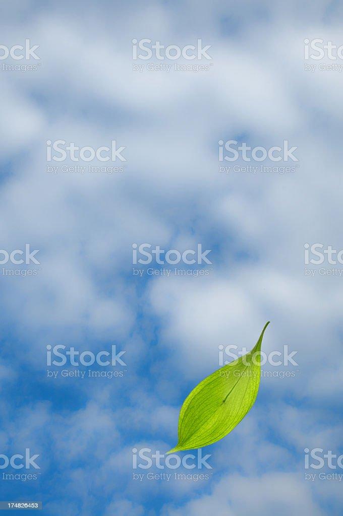 Green leaf falling royalty-free stock photo