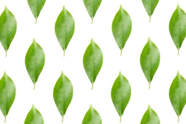 Hoja verde, endecha plana - foto de stock