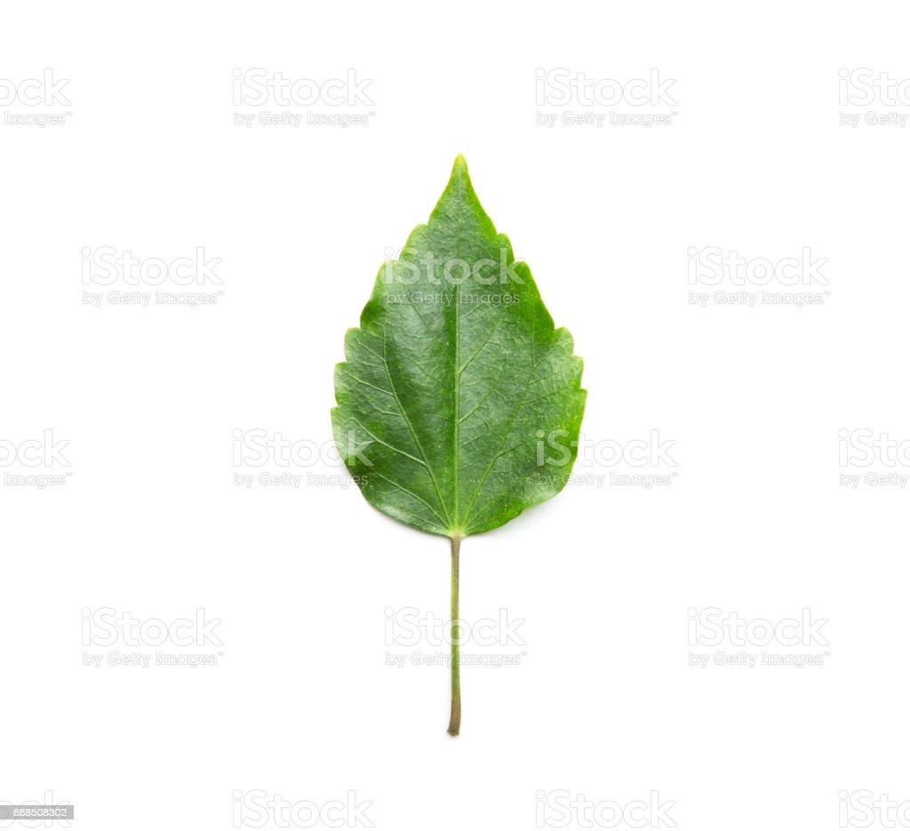 Green leaf, flat lay stock photo