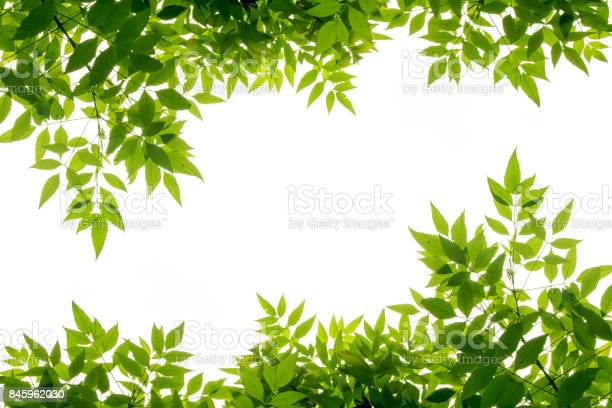 Photo of green leaf frame isolate on white background