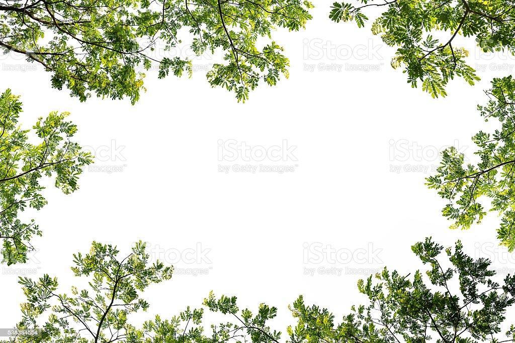 Grüne Blätter Rahmen isoliert auf weißem Hintergrund – Foto