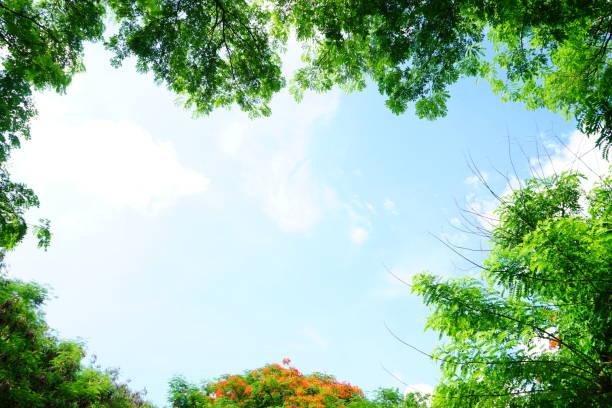 緑の葉フレーム - 木漏れ日 ストックフォトと画像