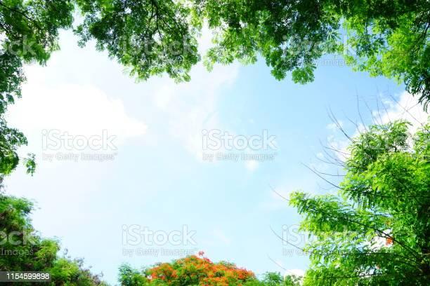 Photo of Green leaf frame