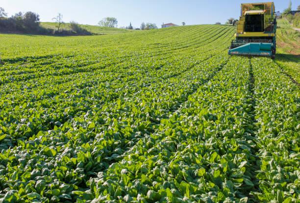Grünblatt-Harvester arbeiten – Foto
