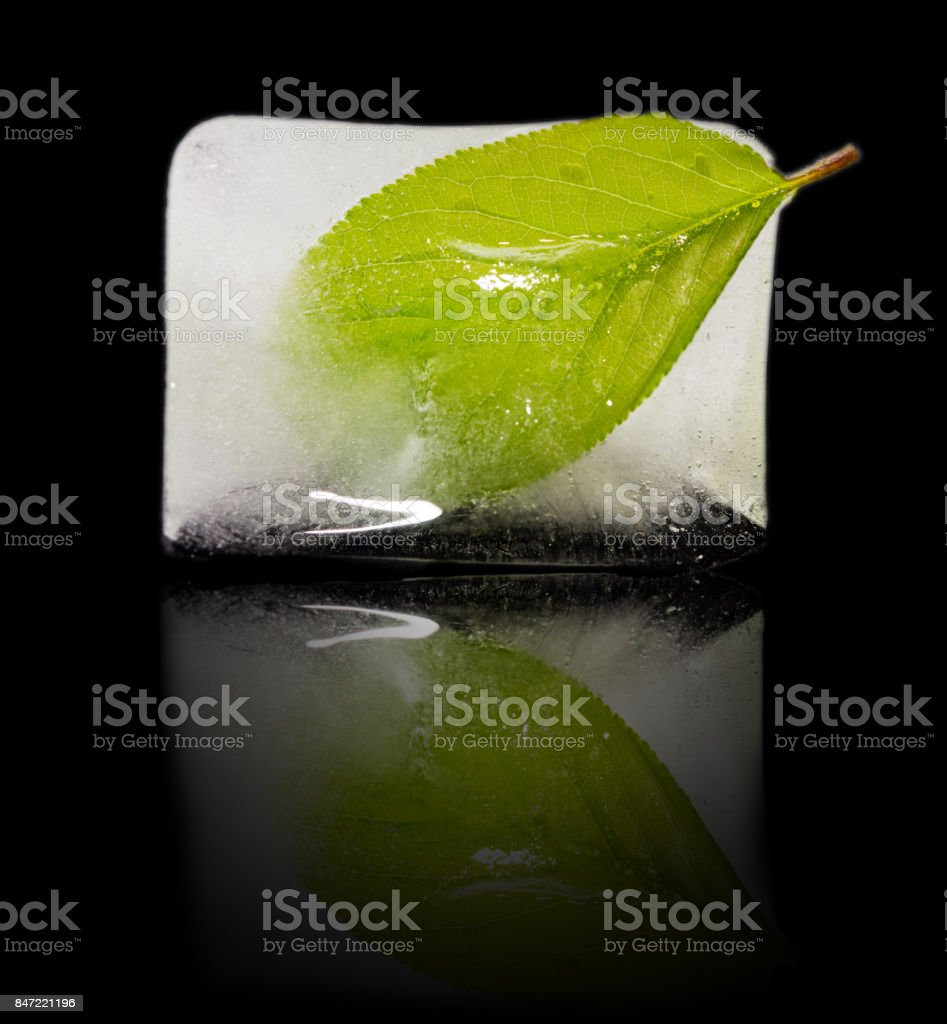 green leaf in the ice on a black background stock photo
