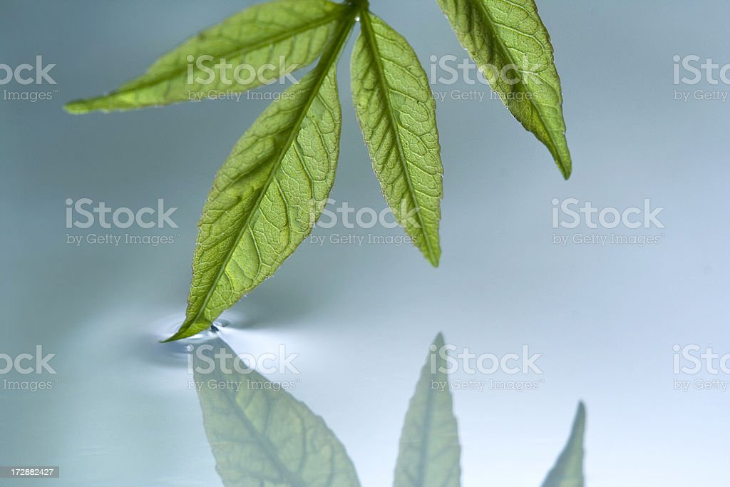 Green Leaf in Water royalty-free stock photo