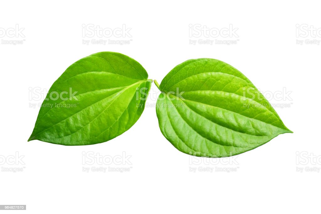 green leaf isolated on a white background closeup royalty-free stock photo