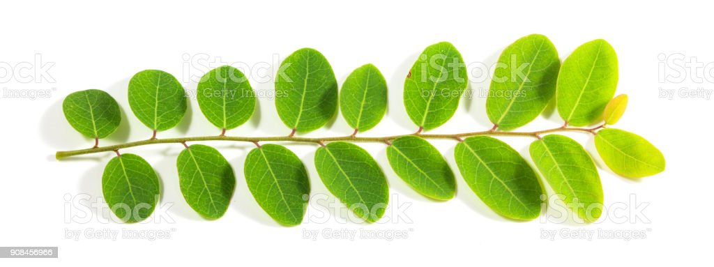 Green leaf isolated on white background. For background Graphic or Texture. stock photo