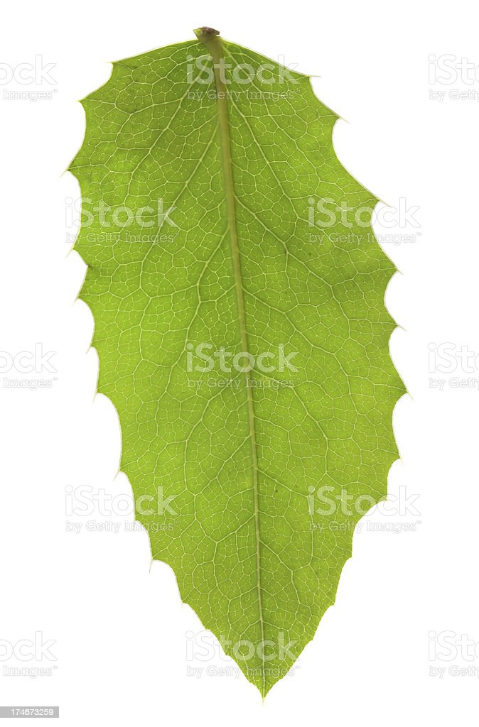 Green leaf isolated on white royalty-free stock photo