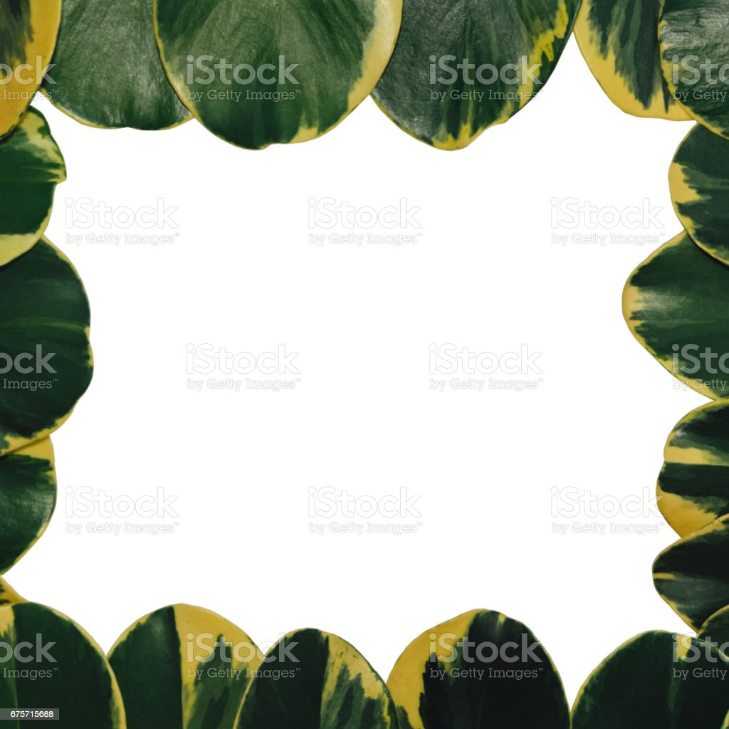 green leaf isolated royalty-free stock photo