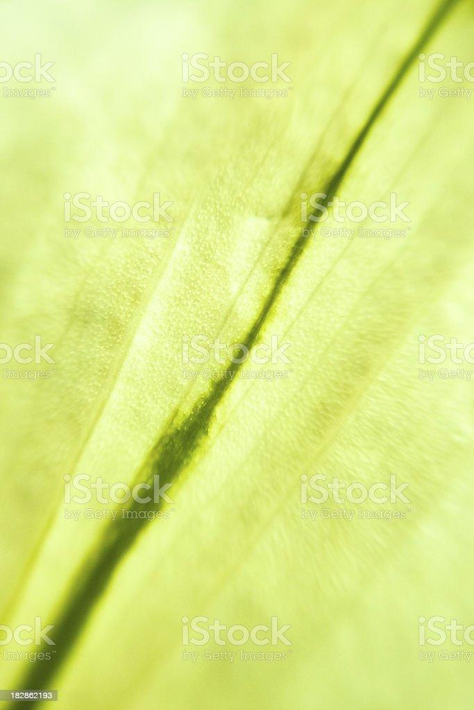 Green Leaf Macro Background royalty-free stock photo