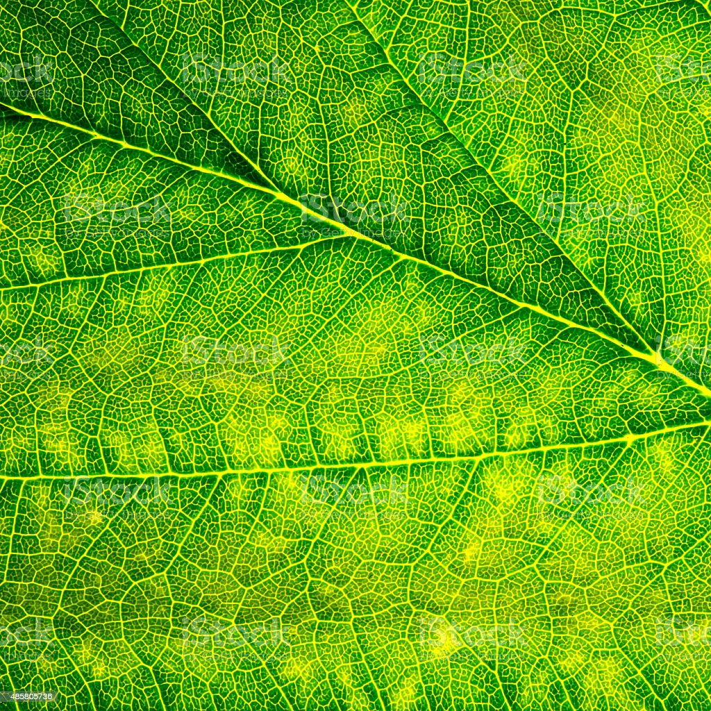 Green Leaf Macro Closeup Background Texture stock photo