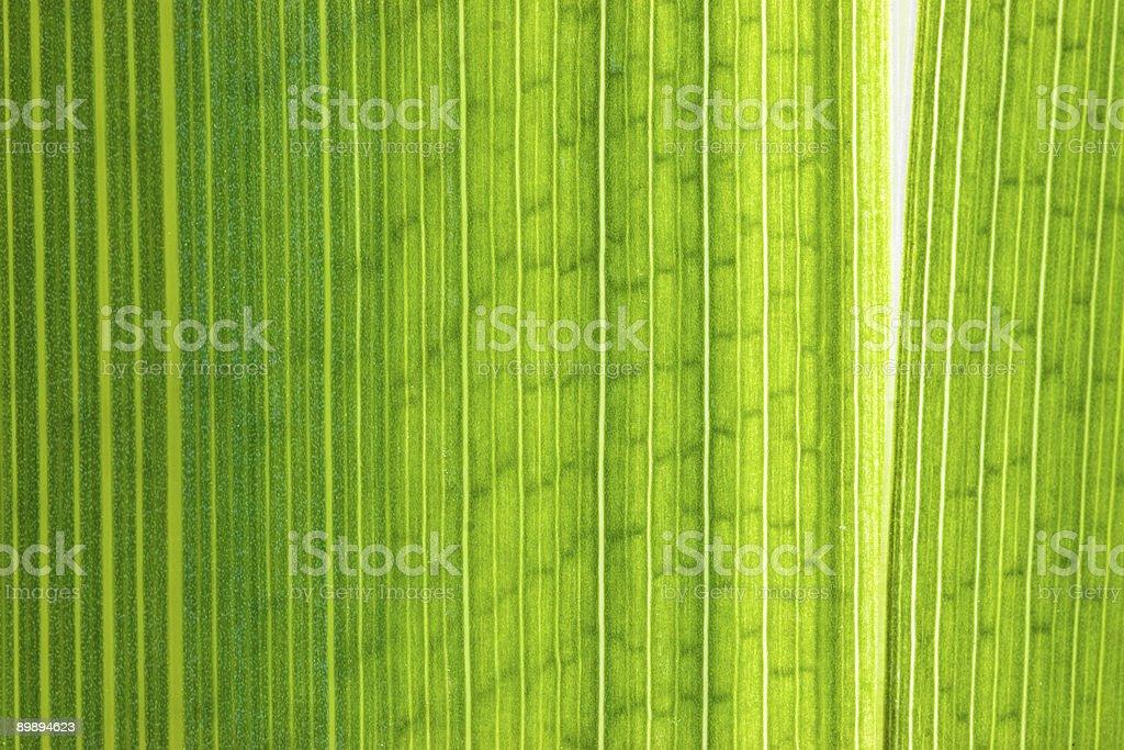 Green leaf macro shot royalty-free stock photo