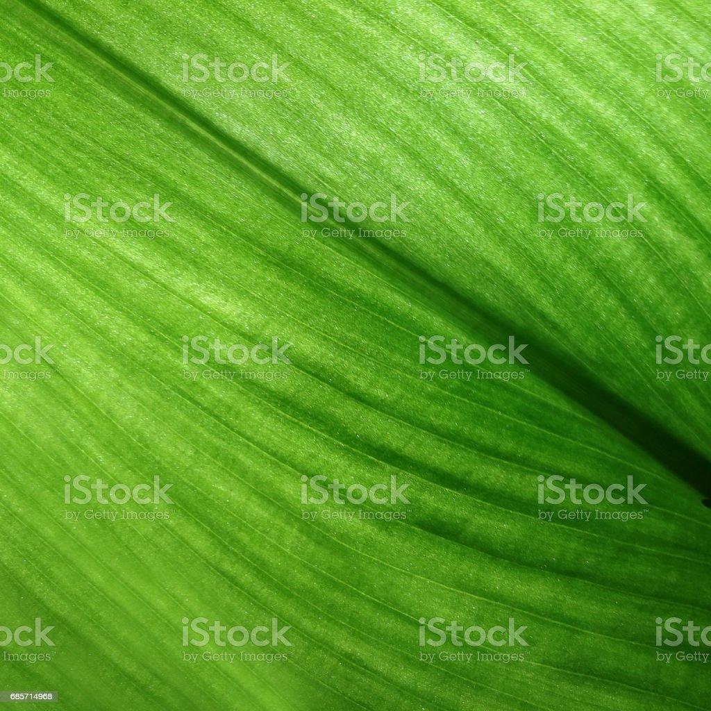 녹색 잎 자연 배경 royalty-free 스톡 사진