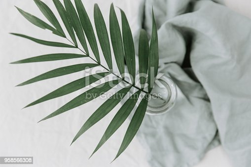 655667160 istock photo green leaf of palm tree on white background, minimal concept 958566308