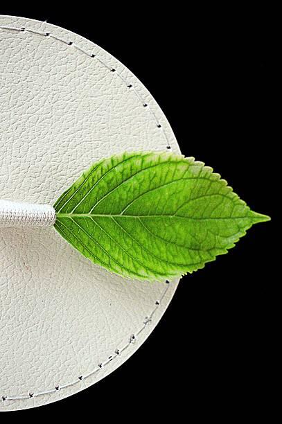 green leaf en caja de sombreros - foto de stock