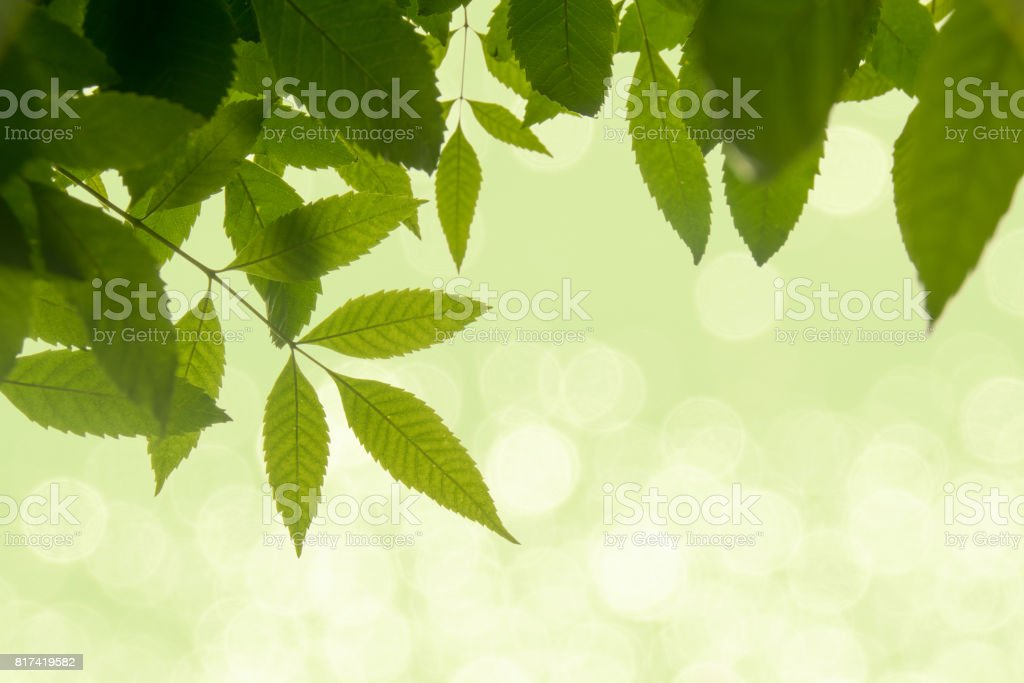 green leaf on soft white green bokeh background stock photo