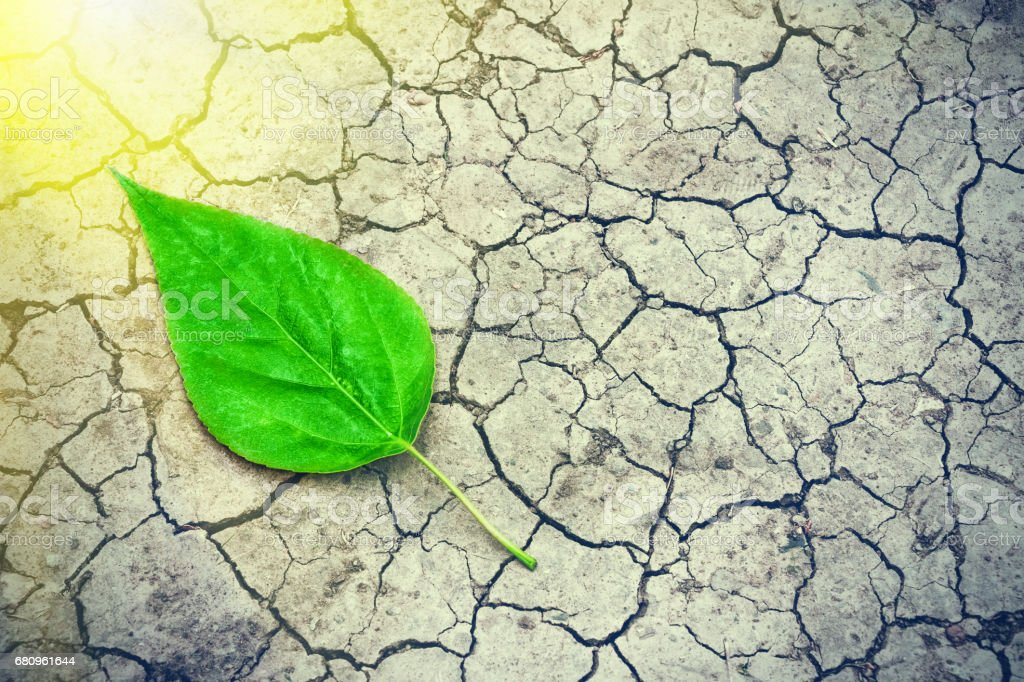Green leaf on the surface of the dry cracked land in the rays of the sun. Environmental disaster. Severe drought and lack of moisture in the soil. Dead ground and consequences of abnormal heat. royalty-free stock photo