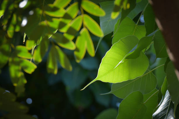 green leaf on the tree,environment conservation stock photo