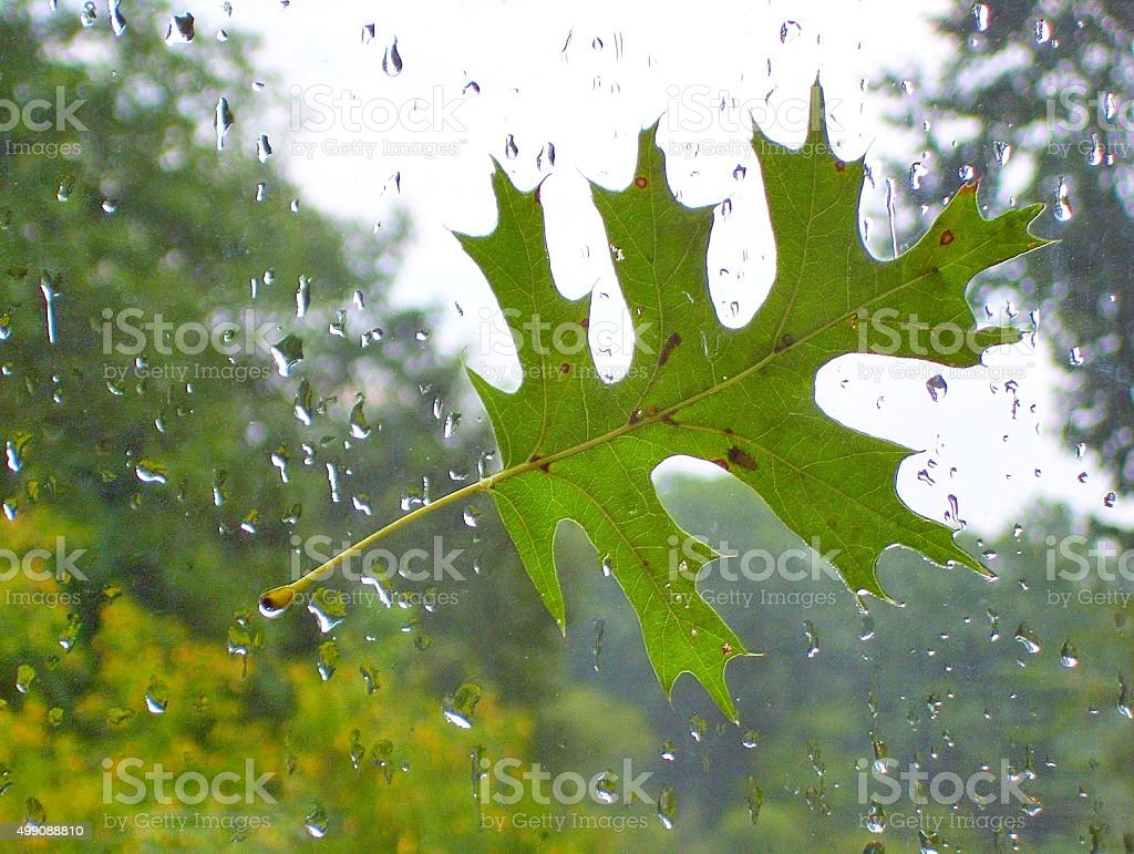 Green Leaf on Window Glass in Early Fall stock photo