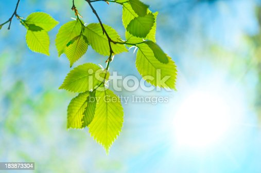 Green leaf opposite sun and sky
