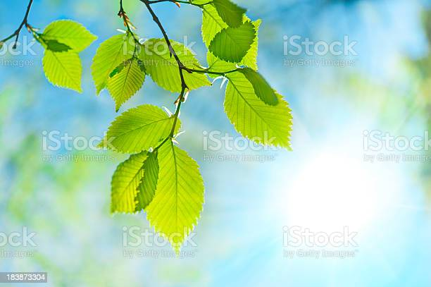 Photo of Green leaf opposite sun and sky