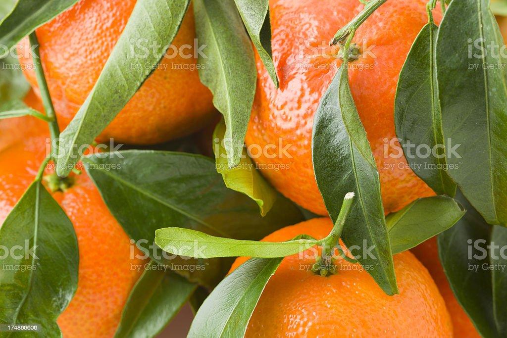 Green Leaf Orange Tangerine Close-Up Background royalty-free stock photo