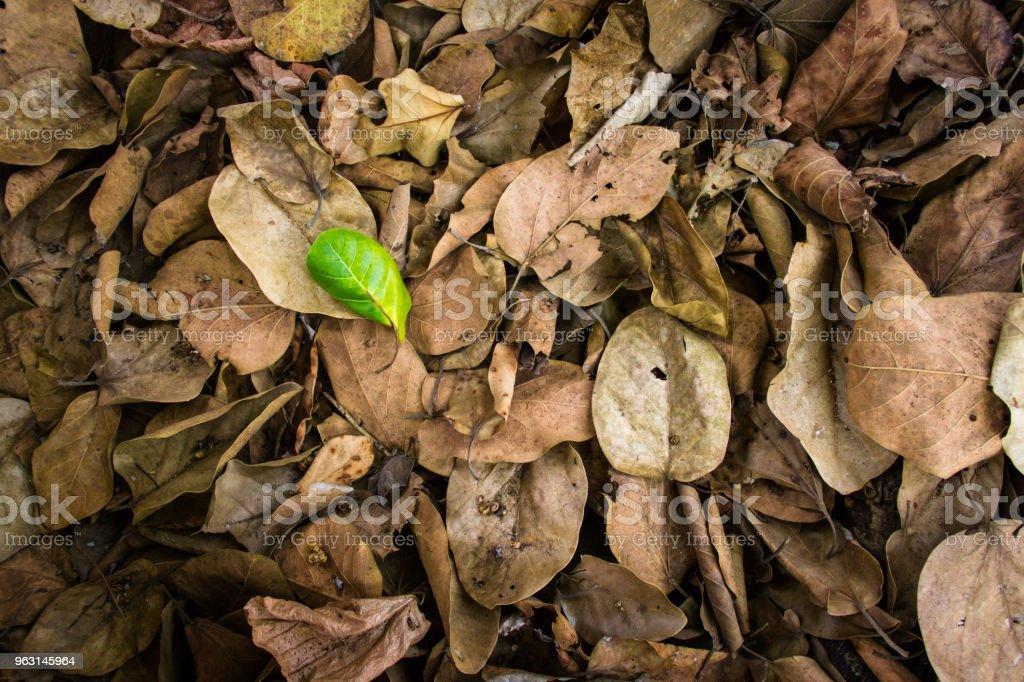 Gröna blad över bruna blad - Royaltyfri Beskrivande färg Bildbanksbilder