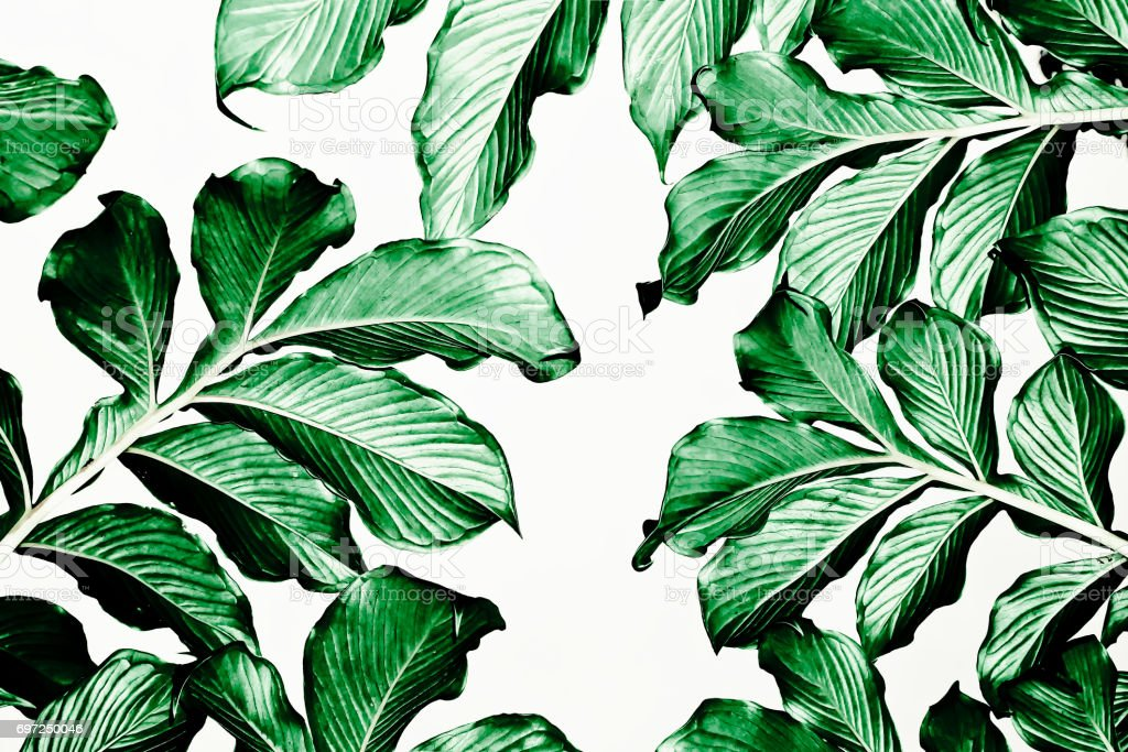 Green leaf pattern on white background stock photo