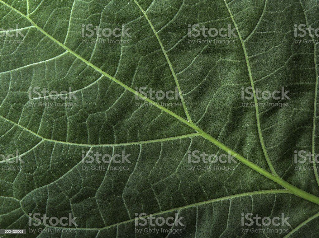 Green leaf pattern perfect backdrop stock photo