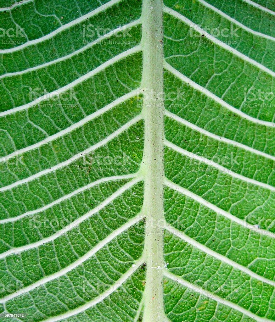 Padrão de folha Verde  foto royalty-free