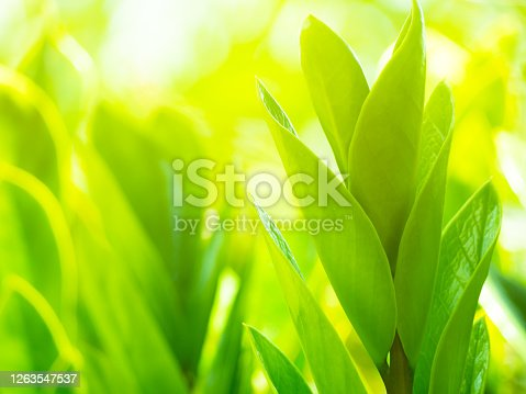 Green leaf in morning on blured background for summer background.