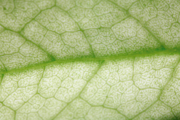 Green leaf – Foto