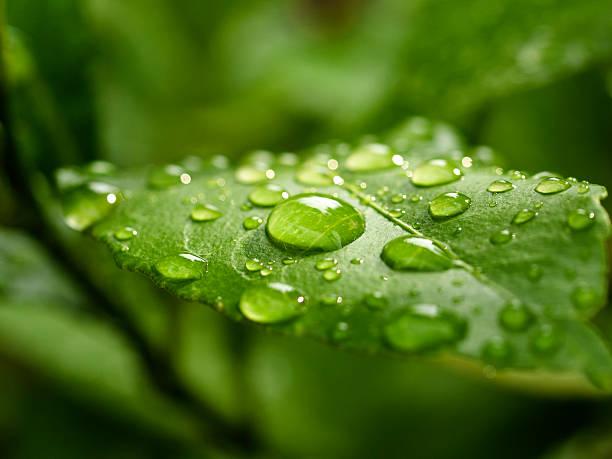 green leaf - dauw stockfoto's en -beelden